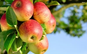 apple-tree free wp